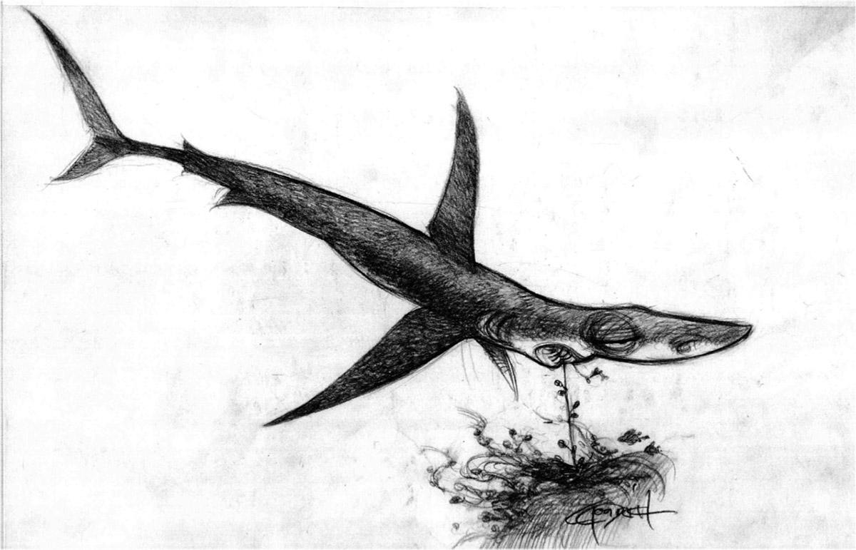nemo-Shark2