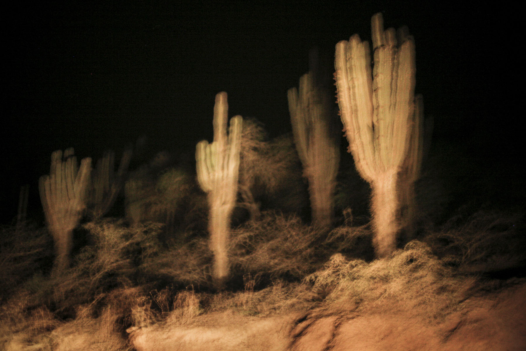 Cactus on the road to Santa Cruz in September 2007