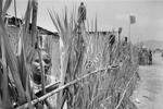 Raboteau, shantytown in August 1986