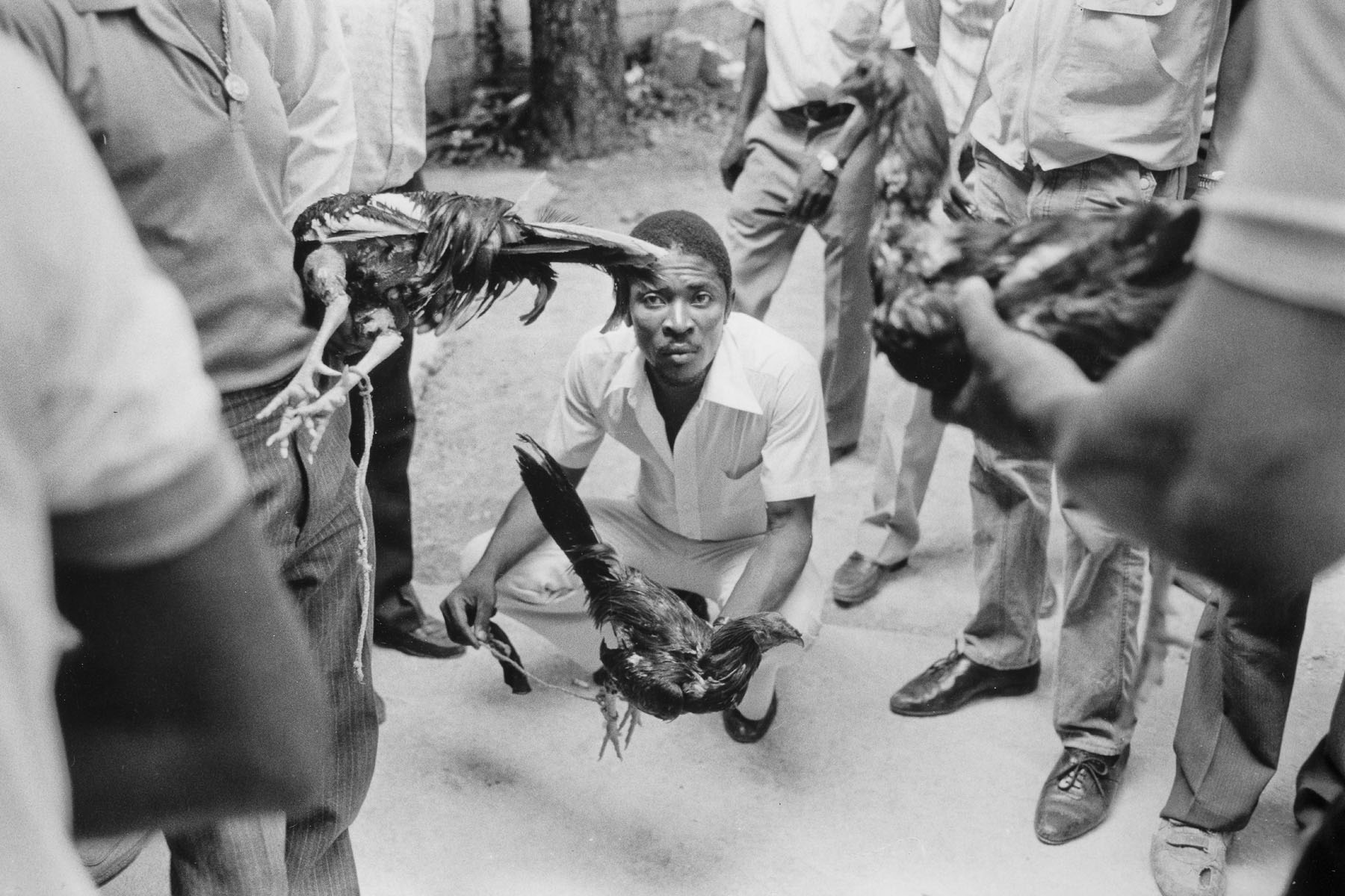 Rooster fight in Petion-Ville in August 1986