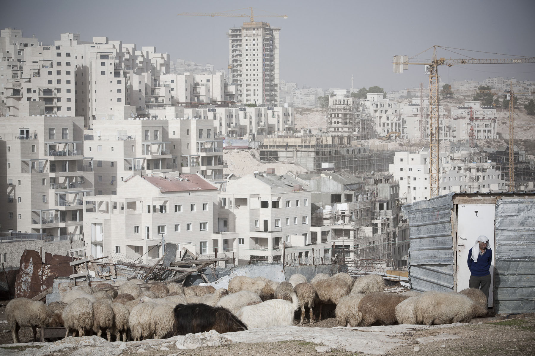 A Palestinian sheperd watching his flock in front of the Har Homa Israeli colony in construction in November 2009