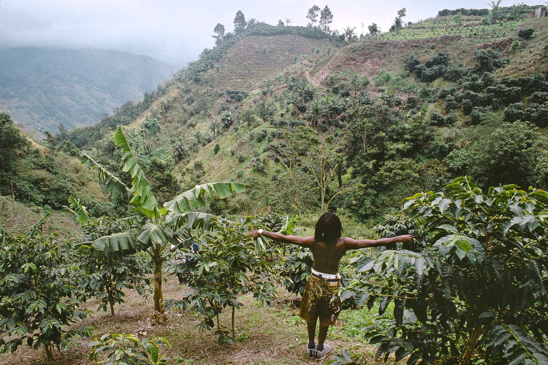Djameelah, Rasta in a coffee field in January 2001
