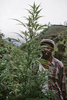 Rasta farmer behind a marijuana plant in January 2001