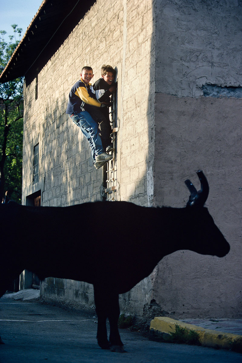 Abrivado. Games with the bulls set loose in the village streets. 2000
