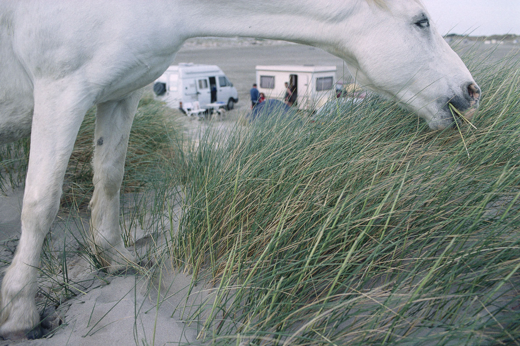 Horse roaming free on the beach. 2000