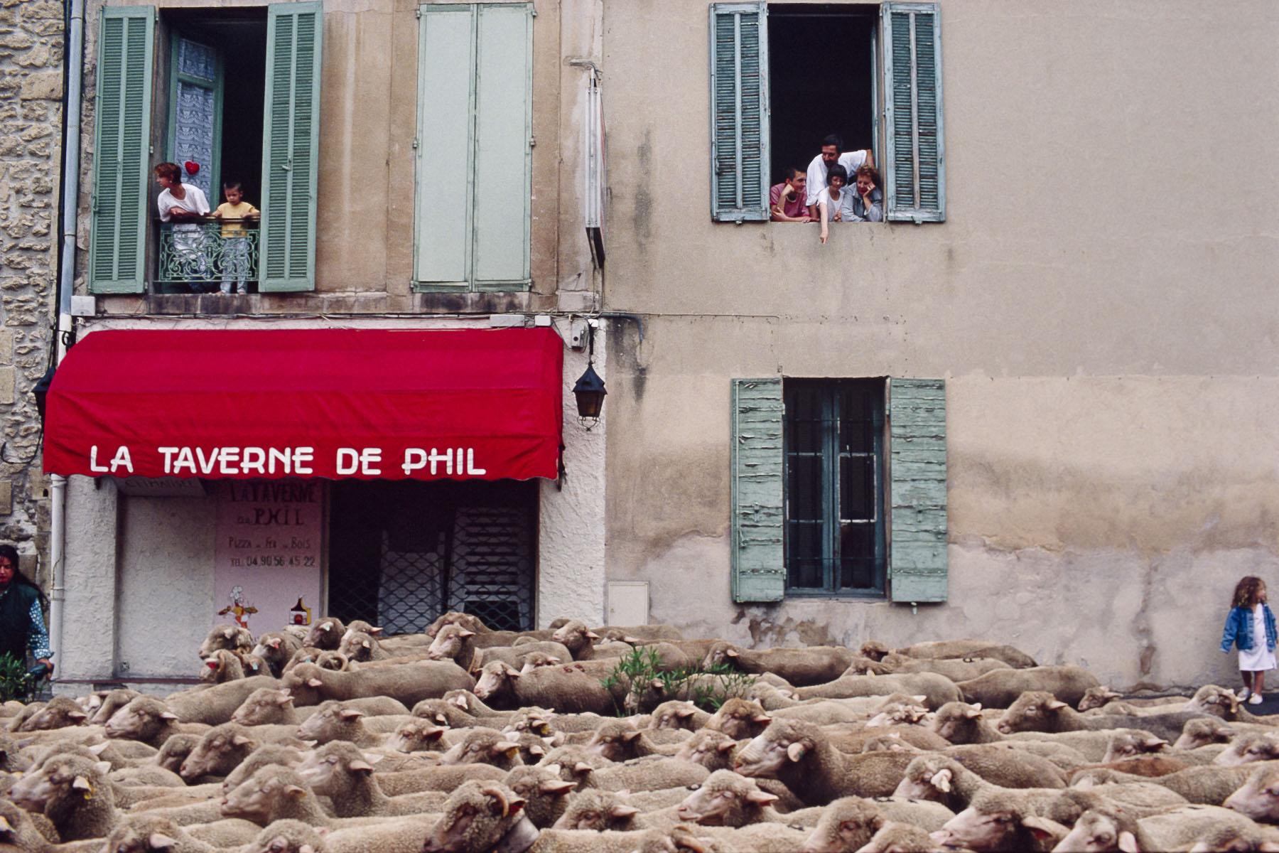 Shepherd's festival. 2000