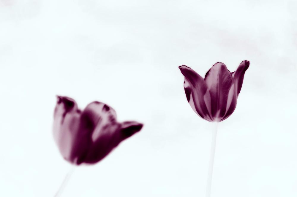 fine-art-photography-black-and-white-color-photographer-adrian-hancu-moldova-025