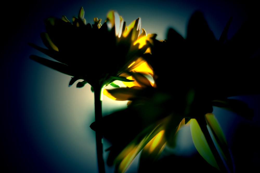 flower-photography-color-photographer-adrian-hancu-moldova-chisinau-romania-bucharest-016