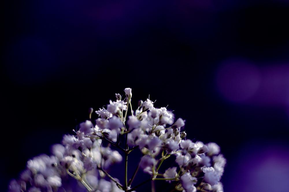 flower-photography-color-photographer-adrian-hancu-moldova-chisinau-romania-bucharest-024