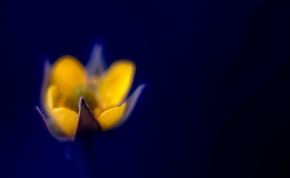 flower-photography-color-photographer-adrian-hancu-moldova-chisinau-romania-bucharest-026