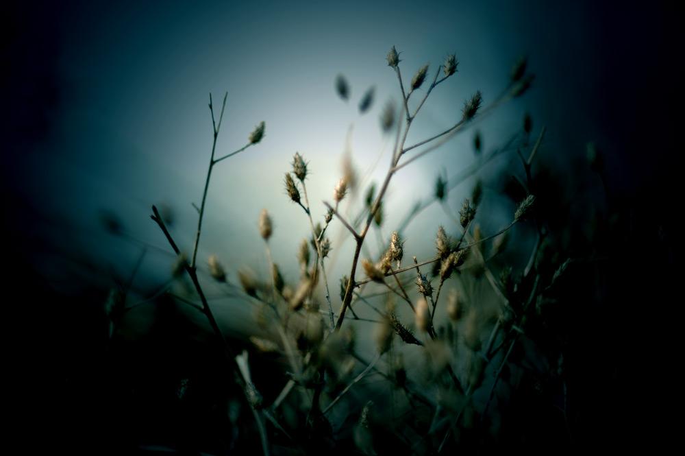 flower-photography-color-photographer-adrian-hancu-moldova-chisinau-romania-bucharest-031