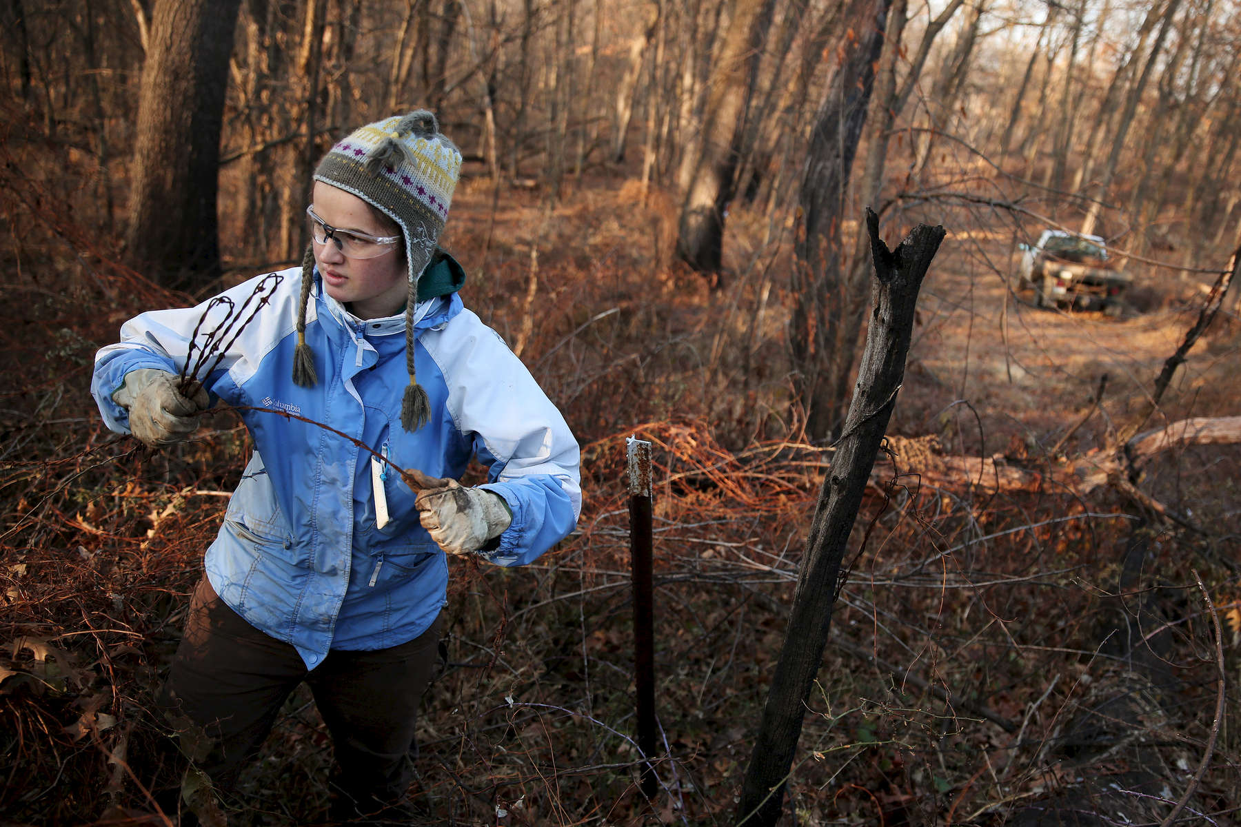 Volunteer Ruth Bowers-Sword works to clear a stretch of old fence in what will eventually be the south bison unit at the Nachusa Grasslands more than doubling the bison's overall area.