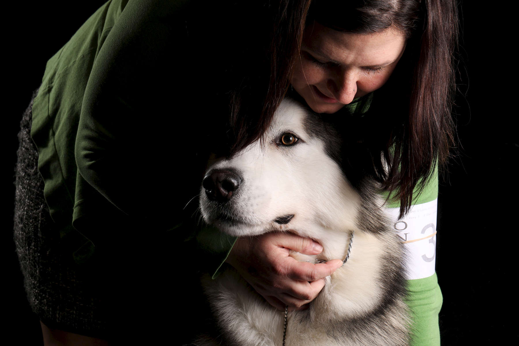 Relic, a 3-year-old Alaskan Malamute, shown by Sabrina Czarapata