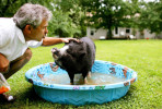 "Chuck Hiatt gives a kiss to his pet Vietnamese Pot Bellied Pig ""Bingley"" as the two play outside in the pig's personal swimming pool in the backyard of Hiatt's home in St. Clair, Mo. {quote}He's probably going to outlive me,{quote} he said. {quote}Guess that means he's going in my will.{quote}"