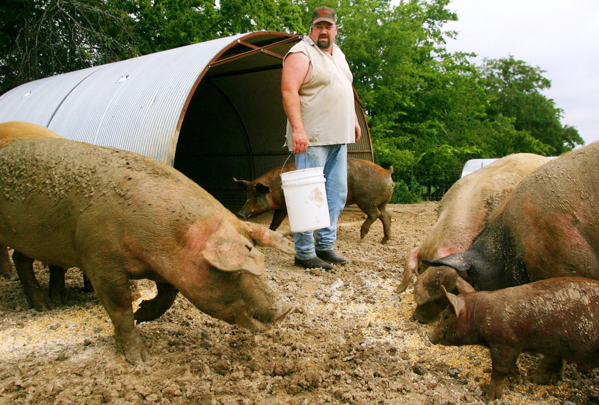 Karlios Hinkebein looked over his mixture of Tamworth, Chester White, Yorkshire, and Hampshire pigs at his farm in Cape Girardeau, Mo. Hinkebein supplies many of the high end restaurants in St. Louis with his hormone and antibiotic free pork.