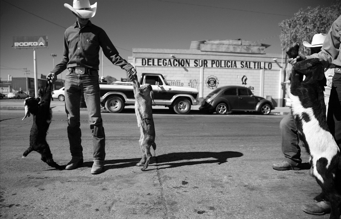 Ranchers in Saltillo, Mexico spend the day selling young goats on the street corner for cabrito, a roasted goat dish that is a popular regional specialty of the city of Monterrey and the surrounding area.