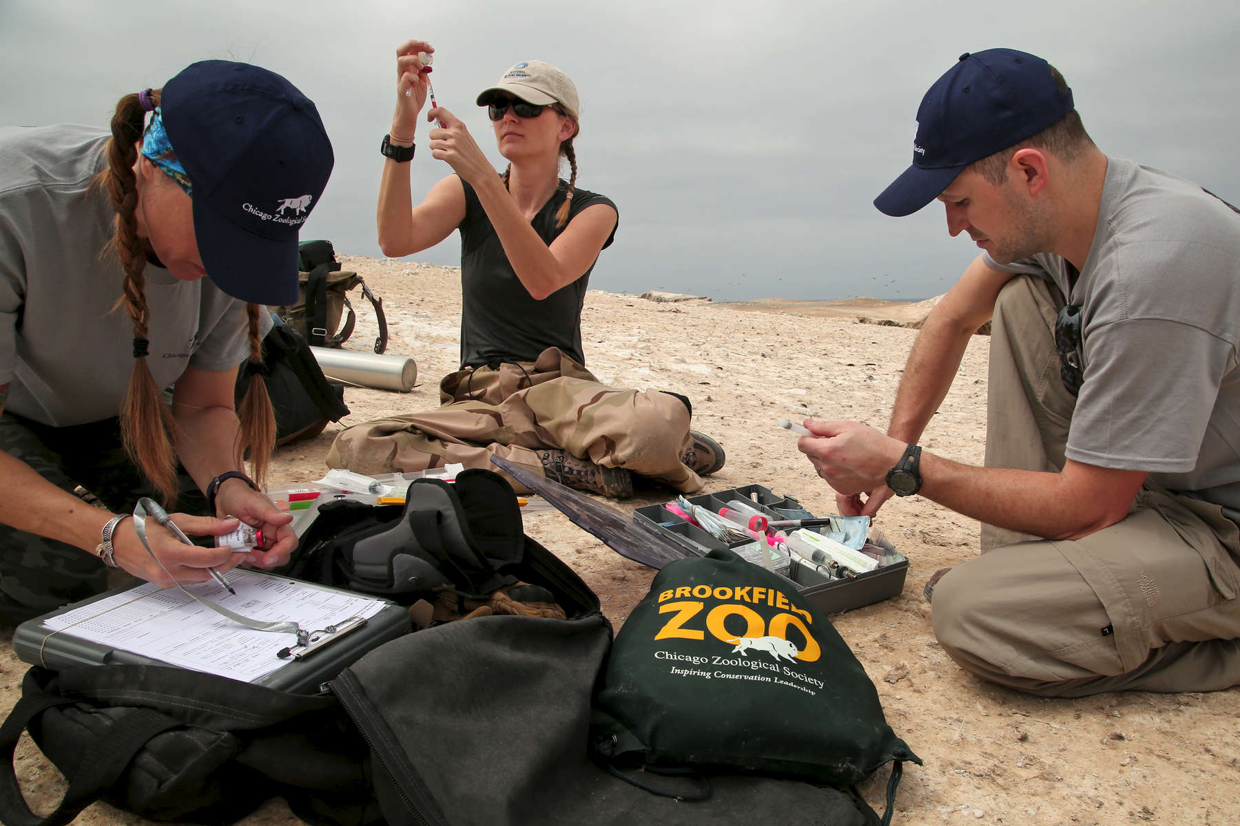 MaryAnn Duda, a veterinary technician for the Brookfield Zoo, at left, Dr. Jenny Meegan, a veterinarian at National Marine Mammal Foundation, in San Diego, at center, and Dr. Michael Adkesson, vice president of clinical medicine at the Brookfield Zoo, at right, draw up medications to tranquilize South American sea lions so the team can collect body samples and measurements to assess the animals' health.