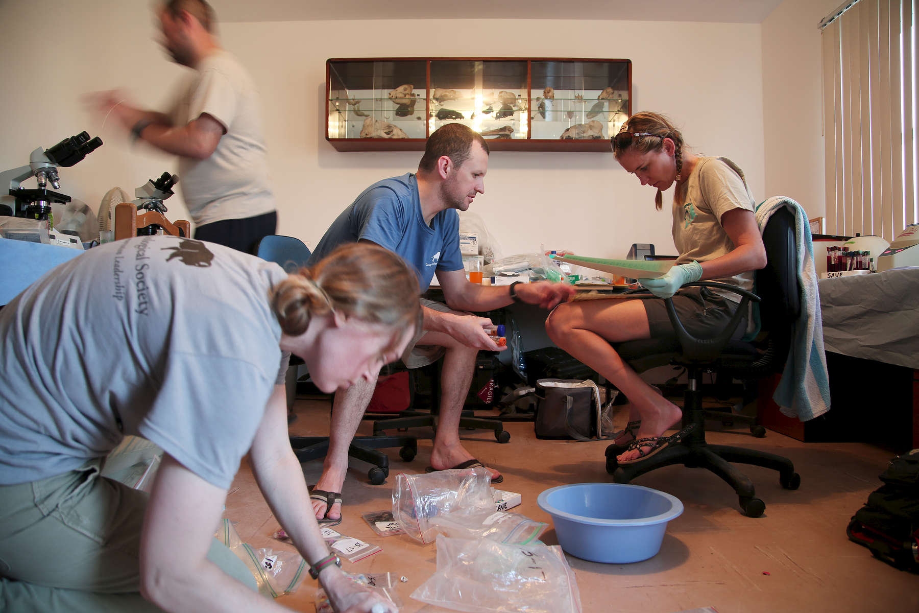 After a day in the field Dr. Adkesson and Dr. Jenny Meegan, a veterinarian at National Marine Mammal Foundation in San Diego, worked to organize samples at the house in town that serves as their lab.