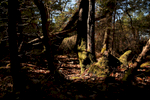 Pockets of light illuminate the foliage at Lime Kiln Point State Park.