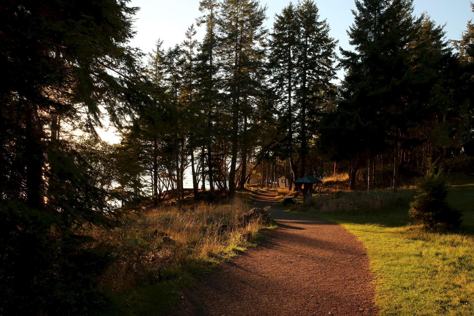 Morning light illuminates the path at Lime Kiln Point State Park.