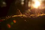 The setting sun illuminates foliage as it cuts though the trees.