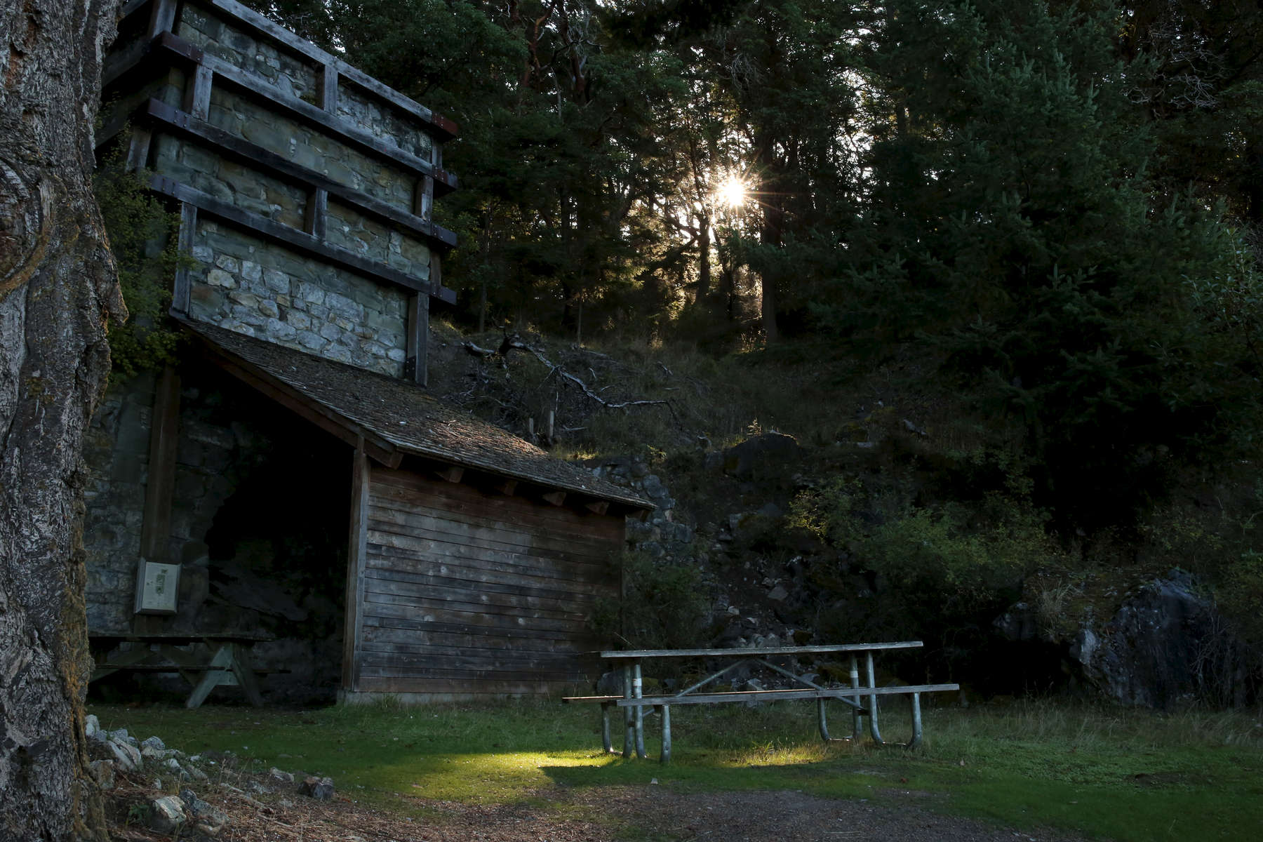 The sun cuts though the trees to illuminate a spot on the ground at Lime Kiln Point State Park.