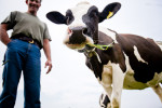 Mike Eastman of Addison, Vermont with one of his grass-fed dairy cows.