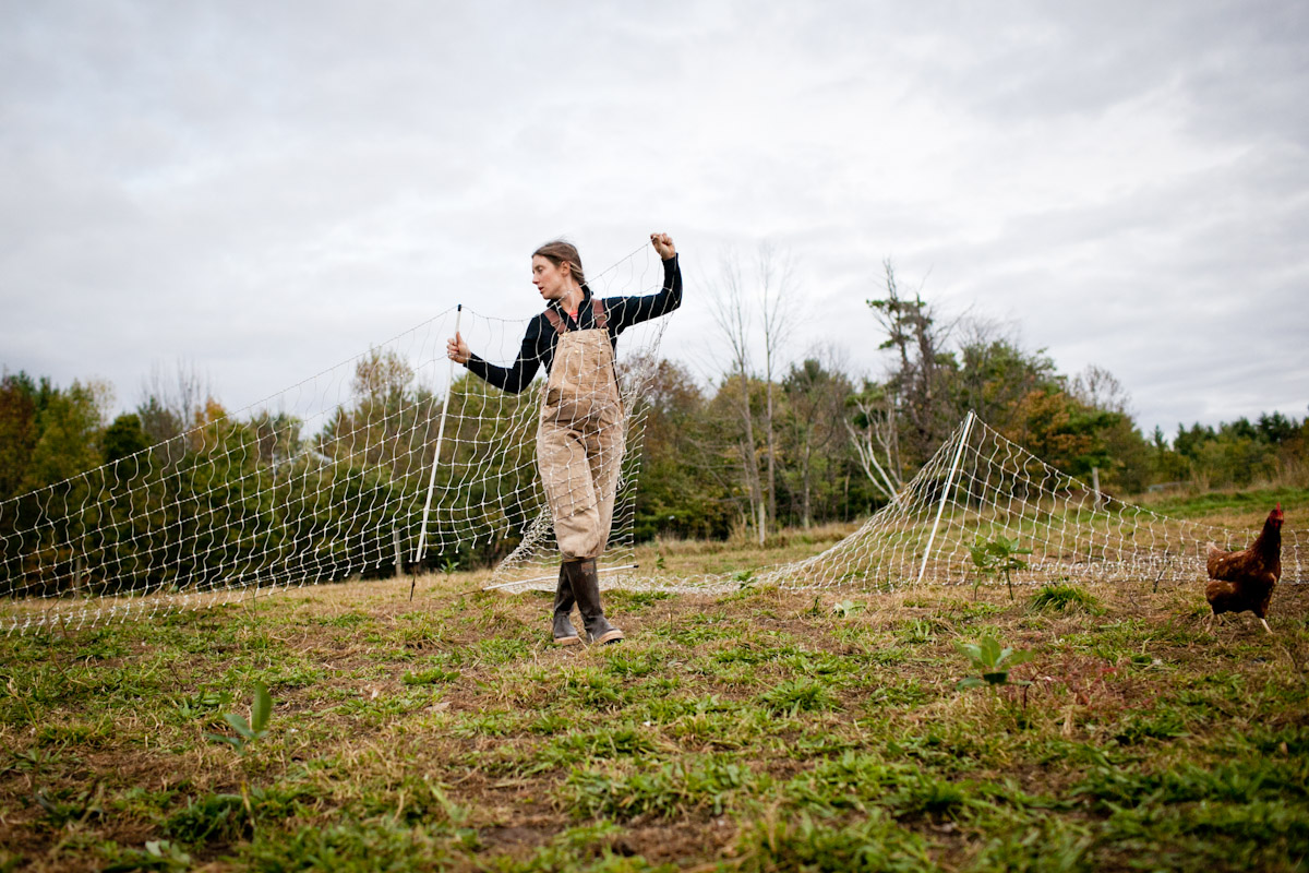 A farm worker moves fencing for Jericho Settlers' 1400 or so free-range hens. The chickens are frequently rotated and follow the cows and sheep. In the spring, after the birds are out on pasture, they pull composted pine shavings from the hen house and chicken manure to spread on the vegetable fields.