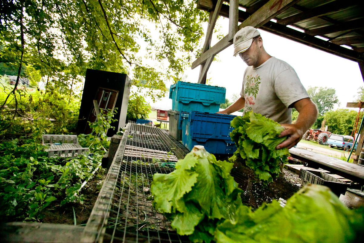 Josh May of Open Heart Farm rinses heads of lettuce after harvesting, at the Intervale in Burlington, Vermont. Next the produce will be stored in bins before being distributed to the farm's CSA members and various farmer's markets.