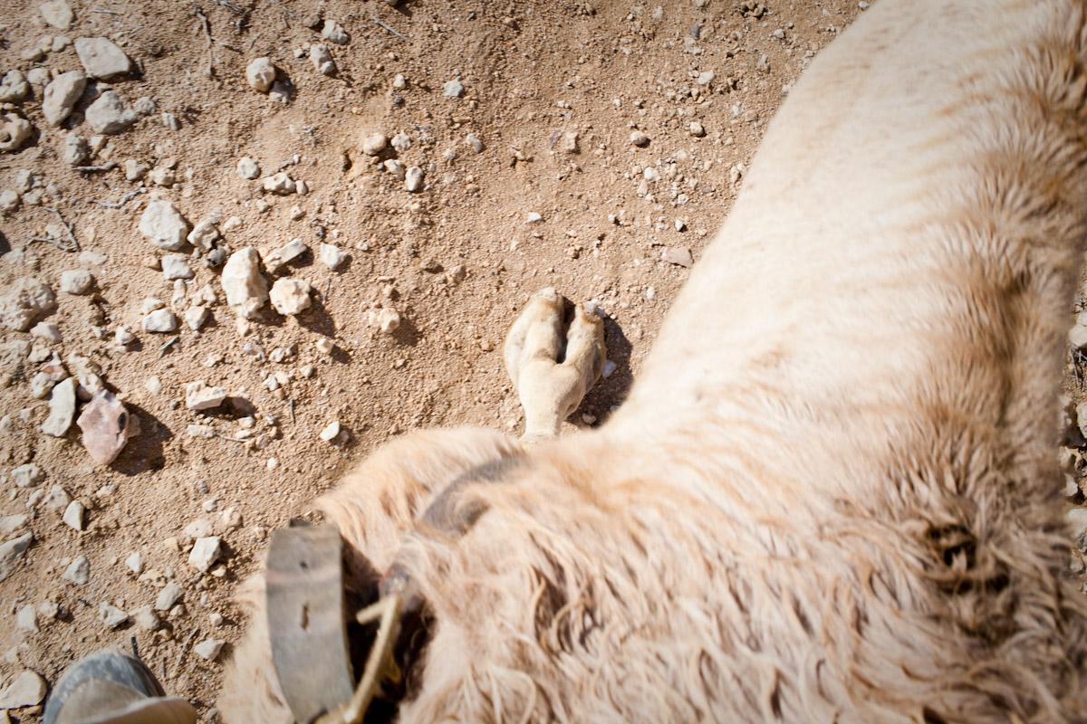 Camel Riding, Negev Desert, Israel
