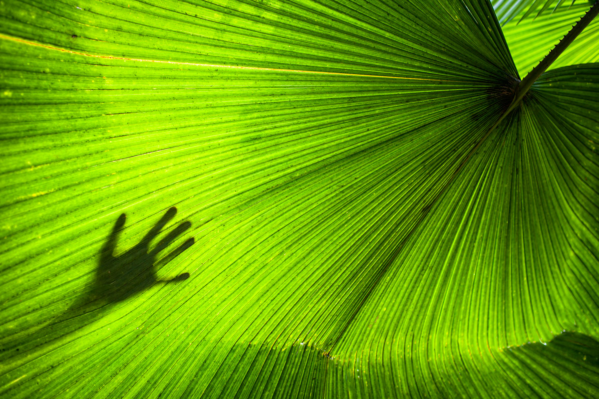 Hand on a large tropical leaf, by Vermont photographer Monica Donovan in Thailand
