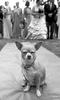 Wurzer_Wedding_0269