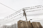 Birds, Bridgeport, 2010