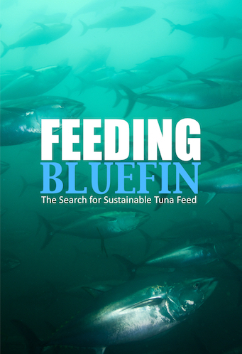 Feeding-Bluefin-Poster-copy