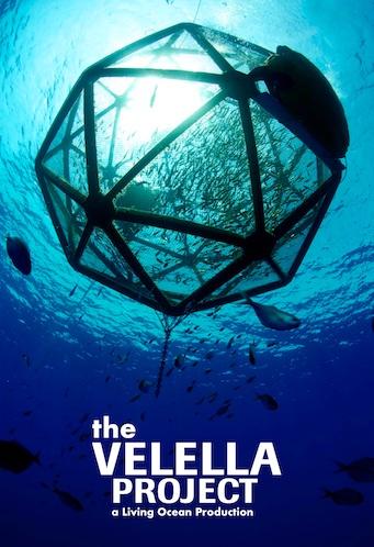 Velella-Project-Poster