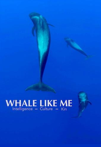 WHALE LIKE ME - 2016