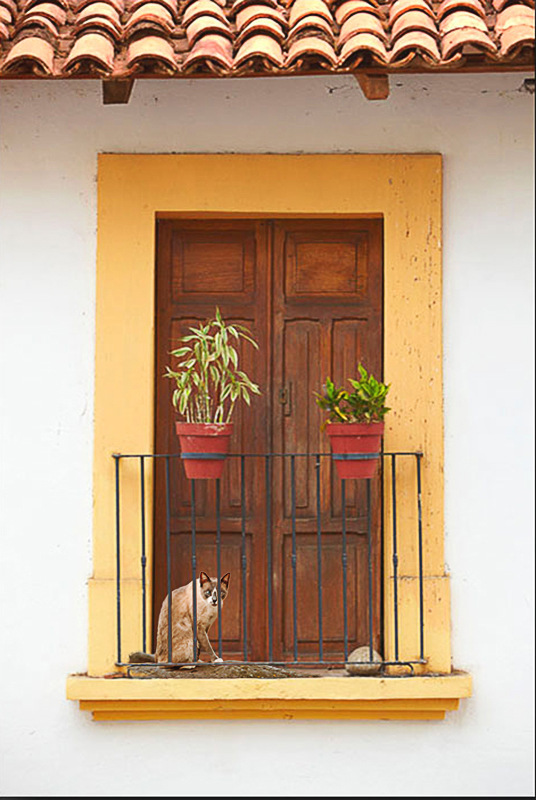 mex_cat_and_door