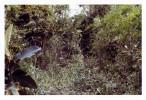 Phelan_1968-70Vietnam_0140