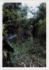 Phelan_1968-70Vietnam_0141