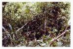 Phelan_1968-70Vietnam_0142