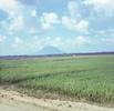Phelan_1968-70Vietnam_0465