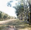 Phelan_1968-70Vietnam_0468