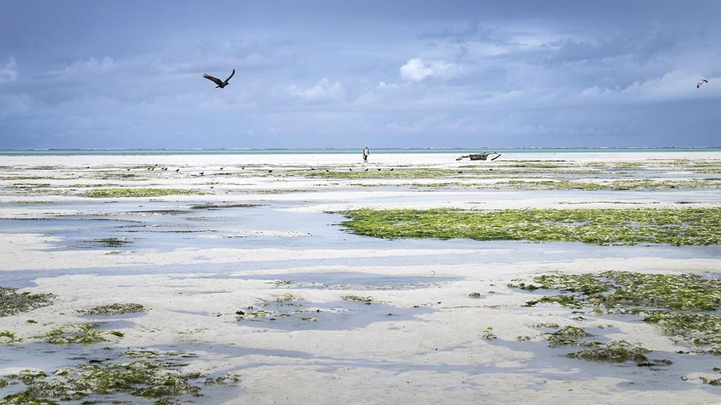 Zanzibar, Tanzania, 2017