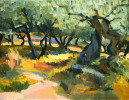 Olive Grovesin Umbria : 1993. 18{quote} X 12{quote} Oil. Private Collection