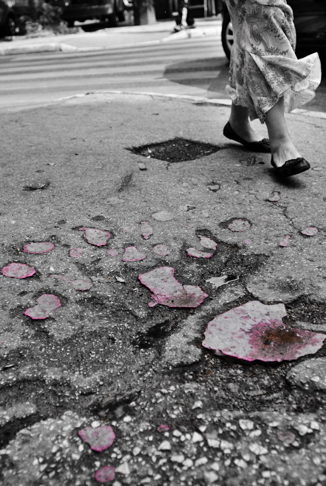 Gaping potholes had, at one time years ago, been filled with red wax by a relief organization and subsequently called Sarajevo's Roses.