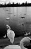 ducks2-14
