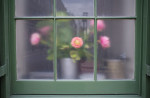 flowerwindow-036