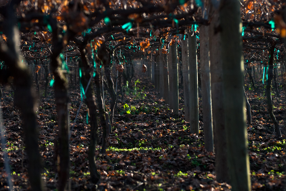 A fruit orchard lies dormant after the harvest. The Central Valley produces much of the fruit, vegetables and nuts that we eat domestically and export, including peaches, apricots, grapes, walnuts, olives and pomegranates.