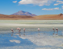 uyuni_flamingoes4