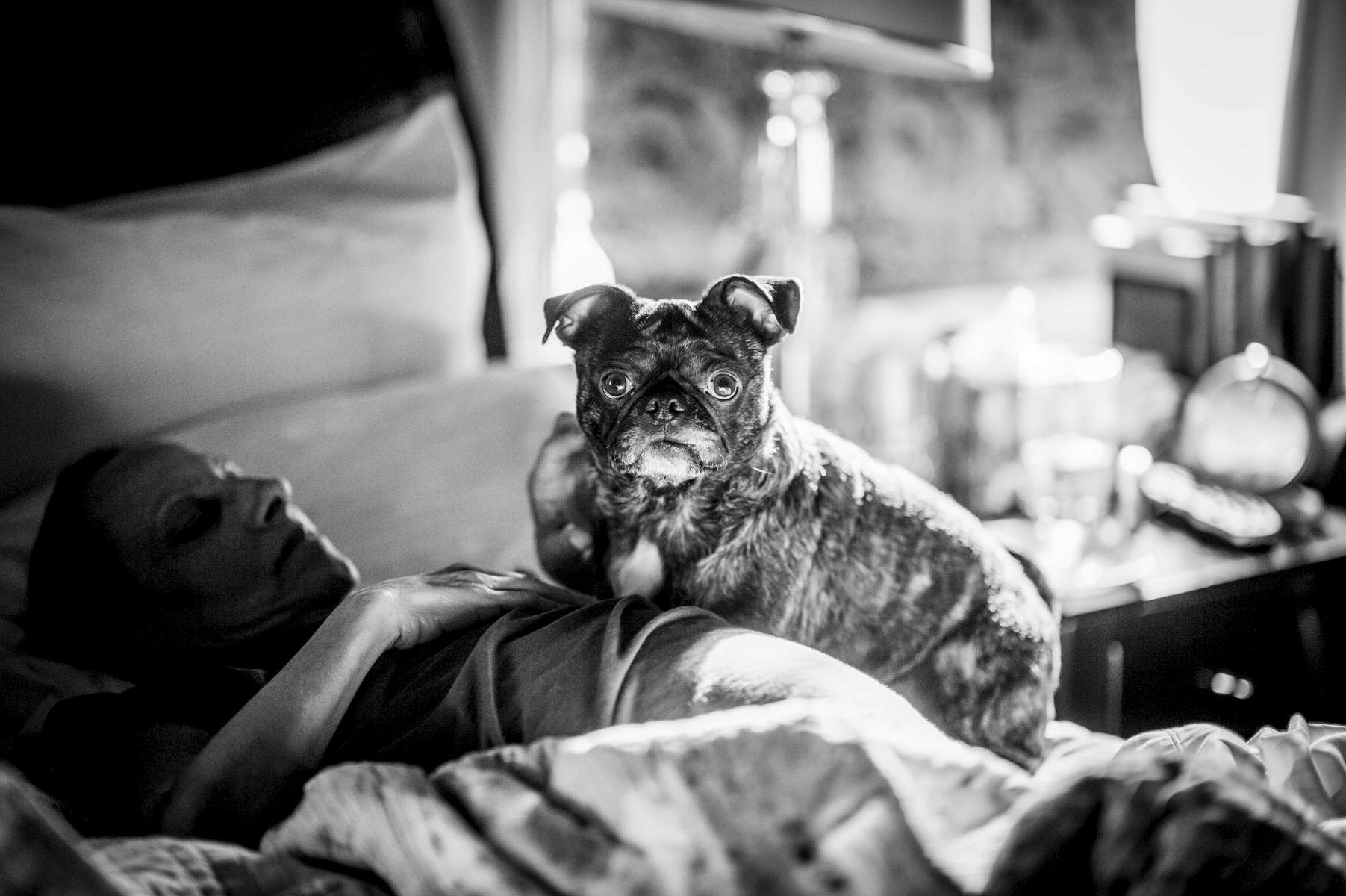 As Mom got weaker, she did not want to be touched. However, she wasn't bothered by Moses, a five-year-old Pug-Boston Terriermix who belongs to a close friend. He lay by her side, and often on top of her, bringing her comfort and many laughs.